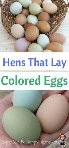 Hens that Lay Colored Eggs - which chickens you want for a colorful nest like blue, green, pink or brown.