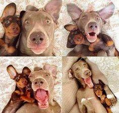 Las mejores caras para selfies perrunas