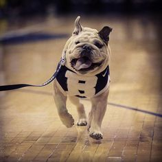#butler #blueII #bulldogs