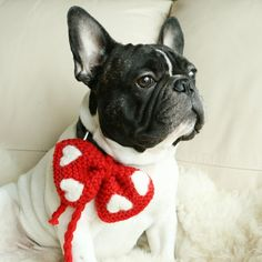 Necklace Accessory for Pet Red with felted white hearts by DMpics, $15.00