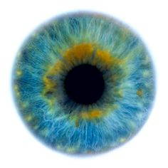 Eye | Iris | Pupil | 目 | œil | глаз | Occhio | Ojo | Color | Texture | Pattern | Macro |  human eye, macro, by Rankin (Eyescapes series)