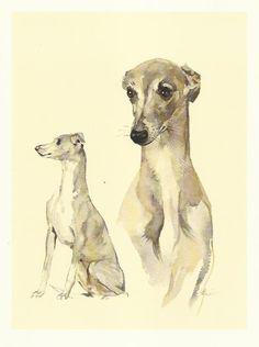 Italian Greyhound colour print by Willie Bar 1975 dog print