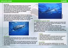Haaien hebben geen zwemblaas, daarom moeten ze blijven zwemmen.