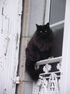 Beautiful big, black and fluffy cat Cool Cats, I Love Cats, Crazy Cats, Pretty Cats, Beautiful Cats, F2 Savannah Cat, Tier Fotos, Maine Coon Cats, Fluffy Cat