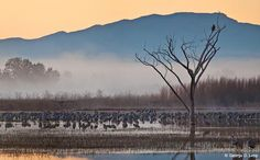 Wildlife Panoramas: Try composite panoramas for a wider view while keeping animals prominent