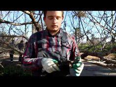 Poda de melocotonero por estudiantes agrónomos de la ETISA en la UPCT - YouTube