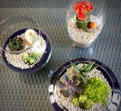 Diy plantes décoration maison - décor
