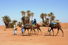 Visit M'Hamid El Ghizlane which is a village in Zagora region of Morocco, 98 km after Zagora, one of the two places in Morocco Sleeping Under The Stars, Camels, Dune, Morocco, Deserts, Two By Two, Camping, Animals, Africa