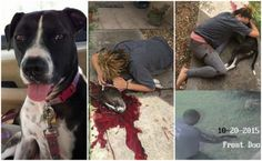Family's Rescue Pet Dog Shot Three Times For No Reason By Officer in Florida City! Demand Justice For Duchess! | PetitionHub.org