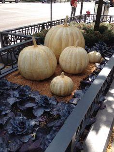 Jardineras en Ave. Michigan en época de #Halloween en #Chicago