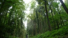 Me in the woods... One of the tallest trees I've ever seen. Amazing place to walk, run or get lost.