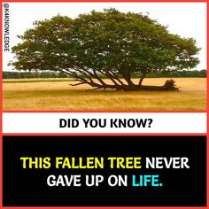 It's amazing trees are like our hero pls dont cut them 😢and grow green🌱🌳 True Interesting Facts, Interesting Facts About World, Intresting Facts, Wow Facts, Real Facts, Wtf Fun Facts, General Knowledge Facts, Knowledge Quotes, Unbelievable Facts