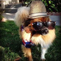 Simply fabulous in Tommy Bahama Pets. (via @dimplyjaded)