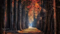 Autumn road (Jaewoon U / seoul / SOUTH KOREA) #Canon EOS 5D Mark IV #landscape #photo #nature