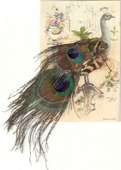 Peacock Postcard with Real Feathers added on