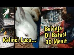 Kelinci Lucu Dan 30 Menit Untuk Waktu Belanja Di Mutiara Super Kitchen - YouTube
