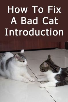 Cat Training Scratching How To Fix An Unsuccessful Cat Introduction - what to do if you tried to introduce a new cat to your resident feline but failed Cat Care Tips, Pet Care, How To Introduce Cats, Introducing A New Cat, Cat Behavior Problems, Dog Behavior, Cat Toilet Training, Herding Cats, Bad Cats
