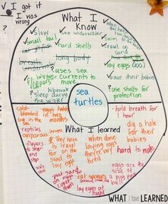 Set the Routine – Informational Writing: Week 1 – Sea Turtles
