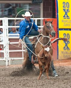 Tie-down Roping: Event Details: A tie-down roper dismounts after throwing his loop as his horse stops.
