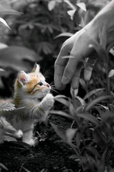 """** """"Come kitten. You don't belong in a colorless world; like a negative. Come  before your own color runs out."""""""