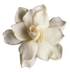 Gardenia - language of flowers means  *Secret Love*