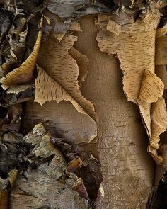 'Turning Nature's Pages' Tree bark photo by Kevin Hedquist