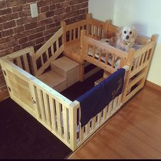 Inspirational schemes that we have a passion for! Dog Bunk Beds, Cute Dog Beds, Diy Dog Bed, Wood Dog Bed, Cat Beds, Dog Bedroom, Puppy Room, Diy Dog Crate, Pet Dogs