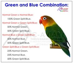 Akhilchandrika : Examples of Green and Blue Couplings Combination: