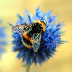 Bumble Bee by Adam-F.deviantart.com on @DeviantArt