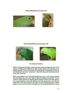 Eclectus Parrots | Cover Page | Book 181017 - Bookemon
