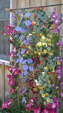 Vertical Garden  Serafini Amelia  enredaderas радуга вьющихся цветов