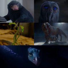 Фантастические звери и места их обитания