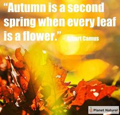 Autumn and Spring