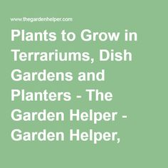 Plants to Grow in Terrariums, Dish Gardens and Planters - The Garden Helper - Garden Helper, Gardening Questions and Answers