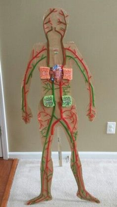 Circulatory System Project: made with pull and peel licorice - heart science activities for kids