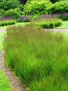 Die 74 besten bilder von gr ser gartenpflanzen for Pflanzengestaltung garten