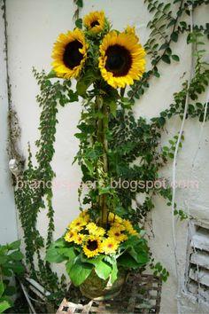 Sunflower Wedding Centerpieces | sunflower topiary wedding flowers centerpiece
