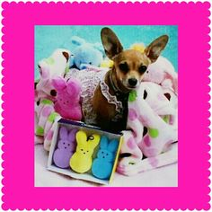 Delilah's first Easter!