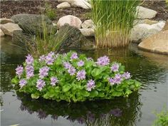 pond planter floaters | ... HYACINTH & FLOATING PLANT ISLAND/Koi Fish PROTECTOR-gard en-pool-pond