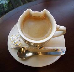 for cat and coffee lovers