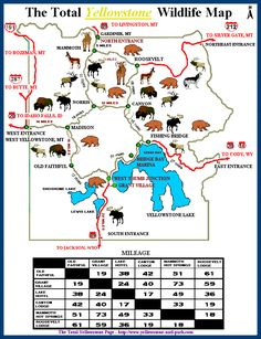 The Total Yellowstone Wildlife Map - ©: