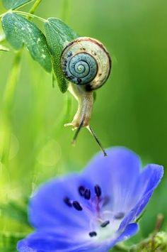 "bellasecretgarden: ""(via ROMANCE – Сообщество – Google+ | Beautiful ✿ World | Pinterest) """