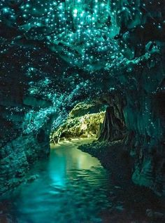 The Waitomo Caves are located just outside the Waitomo Township (New Zealand). It is a famous attraction because of the glowworms, native bioluminescent creatures that live in the caves and produce a blue-green light that decorates the ceiling with a twinkling glow which reminds of faraway galaxies.