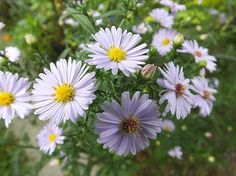 Flowers Photo by Ivan  Stefanovic — National Geographic Your Shot