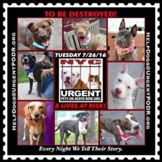 "8 BEAUTIFUL LIVES TO BE DESTROYED 07/26/16 @ NYC ACC. ***ACC is continuing to Clear the Shelter*** This is a HIGH KILL ""CARE CENTER"". Too many great dogs put down daily! Babies, puppies, mamas, healthy, friendly dogs. POOR LIVING CONDITIONS & MINIMAL CARE. Please Share! Click for info & Current Status :  http://nycdogs.urgentpodr.org/to-be-destroyed/"