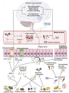 Biology Art, Vagus Nerve, Neuroplasticity, Neurotransmitters, Cortisol, Fermented Foods, Metabolism, Behavior