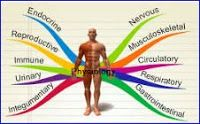 Animal Physiology MCQs part 1 - BioinforMaticianNRJ