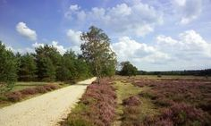 Geniet van 58 natuurgebieden in Gelderland | Natuurmonumenten