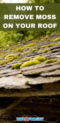 No one wants a moss roof! Learn how to remove moss on your roof to prevent potential damage to your home. Growing Moss, Wind And Rain, Pressure Washing, Spring Ahead, Surface, How To Remove, Beautiful Homes, Outdoor Living, Living Spaces