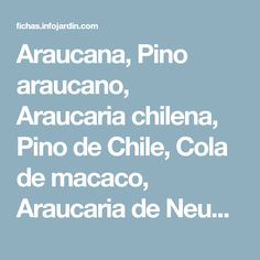 Araucana, Pino araucano, Araucaria chilena, Pino de Chile, Cola de macaco, Araucaria de Neuquén, Peuhén. - INFOJARDIN